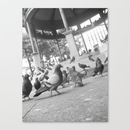 Pigeons at the plaza Canvas Print