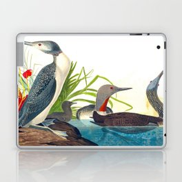 Red-Throated Diver Duck Laptop & iPad Skin