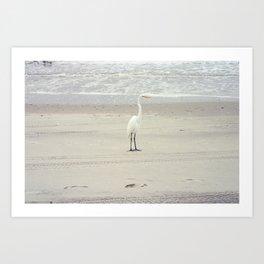 White Heron on Myrtle Beach Shore Art Print