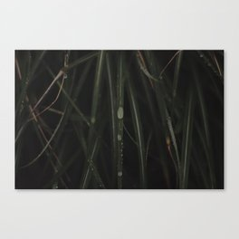 DEWY GRASS Canvas Print