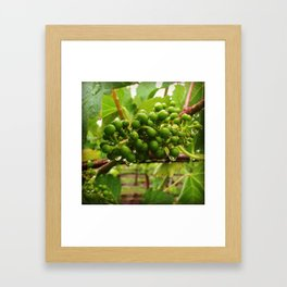 """Baby Grapes"" Framed Art Print"