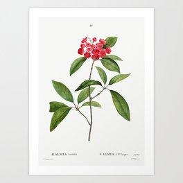 Buxus sempervirens fruticosa from Traite des Arbres et Arbustes que lon cultive en France en pleine Art Print