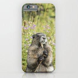 Hoary Marmot's Dinner Among the Flowers iPhone Case