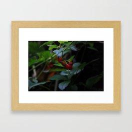 buggy on a berry Framed Art Print