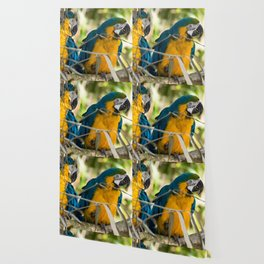 Parrots couple in the tree tops Wallpaper