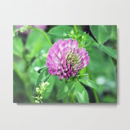 Clover Flower Metal Print