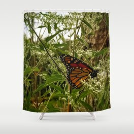 Feeding butterfly Shower Curtain