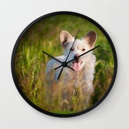 Single white stray tyke dog at the meadow Wall Clock