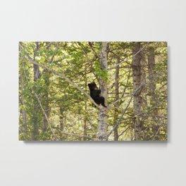 Bear Cub Photography Print Metal Print