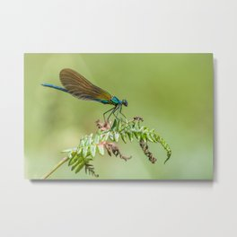 Summer lady Metal Print