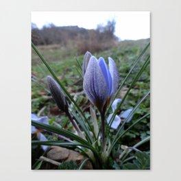 Winterflower Canvas Print