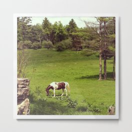 Horse in a Spring Field in Connecticut Metal Print