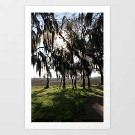 Long Shadows of the Cypress Art Print