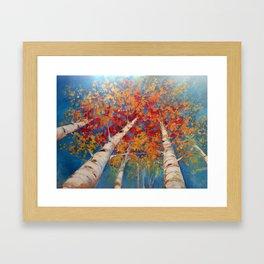 Birch tree point of view Framed Art Print