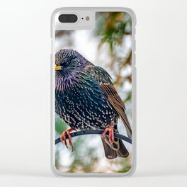European Starling Clear iPhone Case