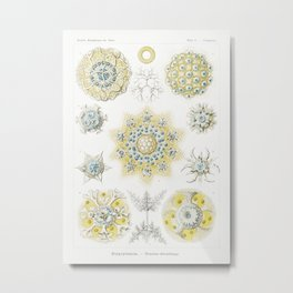 Polycyttaria–Vereins-Strahling Metal Print