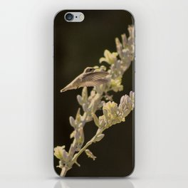 Closeup of Hummingbird Hovering Over Hesperaloe Parviflora Flower iPhone Skin