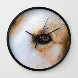 Portrait of a lovely stray dog Wall Clock