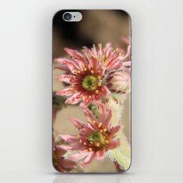 Barren Beauty iPhone Skin