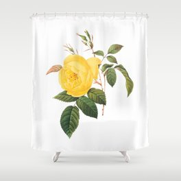 Vintage Yellow Rose [01] Shower Curtain