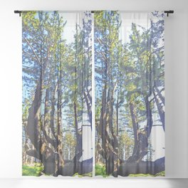 Octopus Tree Sheer Curtain