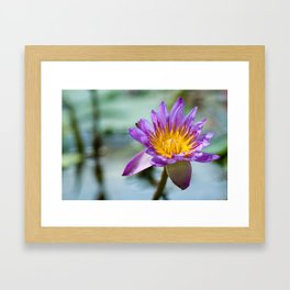 Blue Egyptian Water Lily 540 Framed Art Print