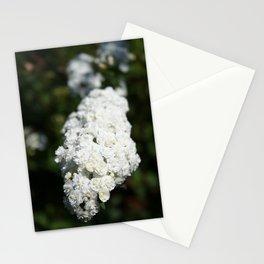 Deutzia White Spring Blossoms Stationery Cards