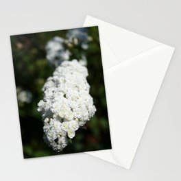 Deutzia White Spring Blossoms Stationery Cards
