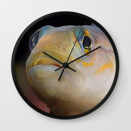 Goby Fish Staring Face Wall Clock