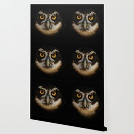 Trading Glances with a Spectacled Owl Wallpaper