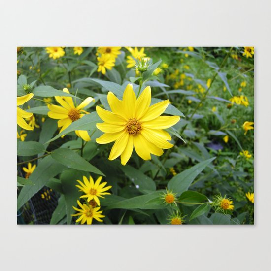 Woodland Sunflowers Canvas Print
