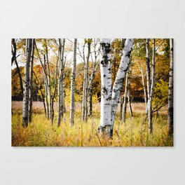 Birch Bottoms Canvas Print