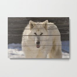 Aries the White Wolf on Faux Weathered Wood Texture Photograph Metal Print