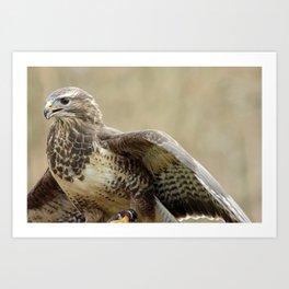 magnificent falcon Art Print