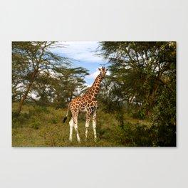 Nakuru Giraffe Canvas Print
