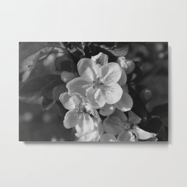 Spring Blossoms in Denmark Metal Print