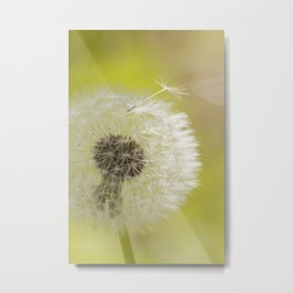 Dandelion wish Metal Print