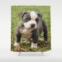 pit bull Shower Curtains featuring Pit Bull Puppy by MandiMccl