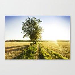 Catalan landscape Canvas Print