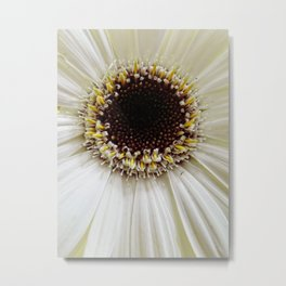 Crowning daisy Metal Print