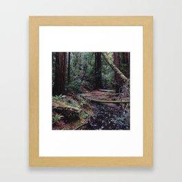 Muir Woods, Marin County, CA Framed Art Print