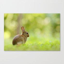 The Happy Rabbit Canvas Print