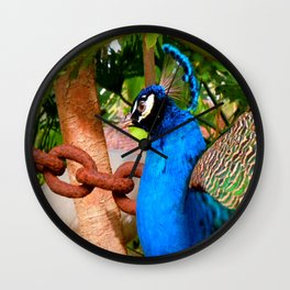 Peacock at Fountain of Youth Wall Clock
