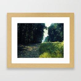 Orange Grove Framed Art Print