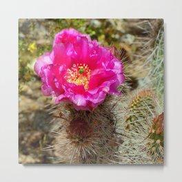 Hedgehog Cactus In Bloom Metal Print