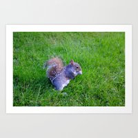 Squirrel 3 Art Print