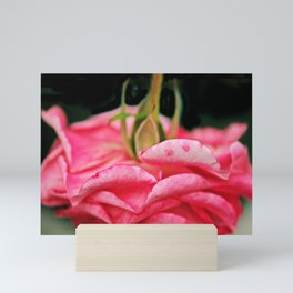 Fallen Pink Rose flower Mini Art Print