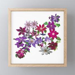 Cascade of Clematis Framed Mini Art Print