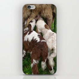 Twin Lambs Suckling From Their Mother iPhone Skin