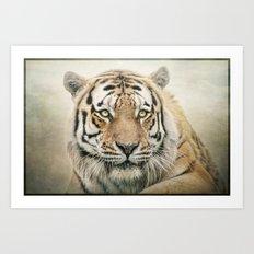 Portrait of a Siberian Tiger Art Print